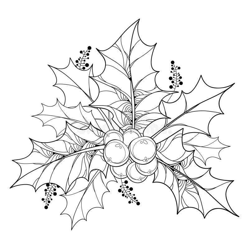 与概述冬青属或欧洲霍莉叶子和莓果的传染媒介分支在白色背景 向量例证