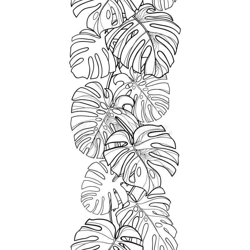 与概述热带Monstera的传染媒介无缝的样式或瑞士乳酪植物在黑色的叶子束在白色背景 库存例证