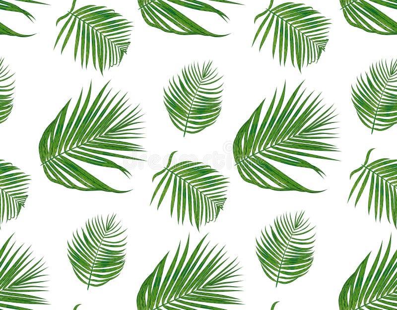 与槟榔树棕榈热带种子分支,绿色l的无缝的样式 皇族释放例证