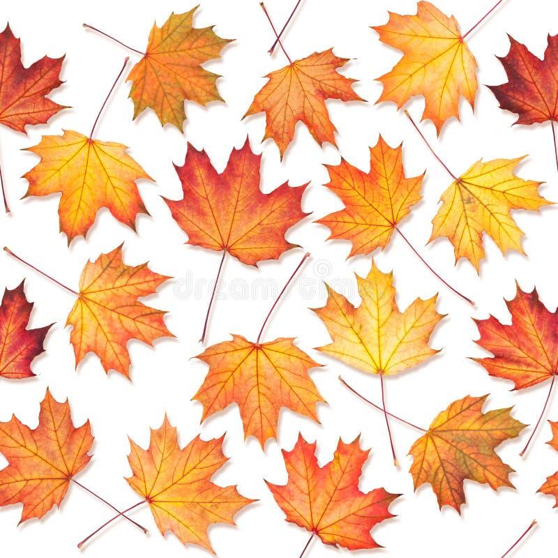 与槭树叶子的无缝的纹理 库存图片