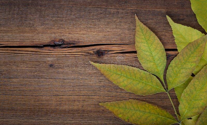 与槭树叶子的秋天木背景 库存图片