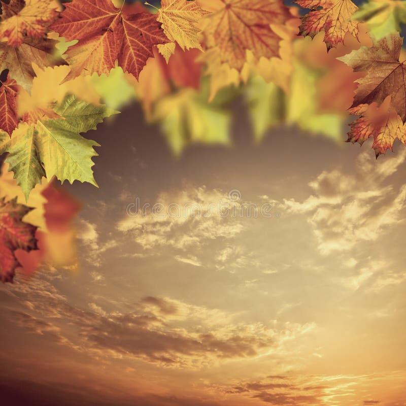 Download 与槭树的中立秋季背景 库存照片. 图片 包括有 本质, 自治权, 更改, brander, 中立, 对象 - 59109650