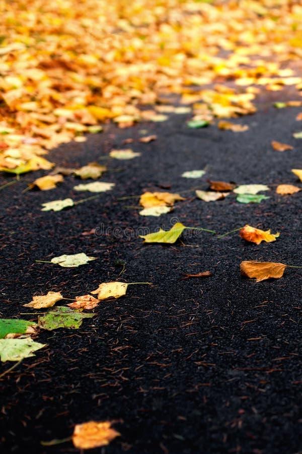 与槭树的美好的秋天背景在黑沥青离开 免版税库存图片