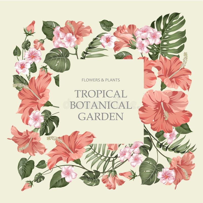 与模板文本的热带花框架在灰色背景 签到中心热带植物园 向量例证
