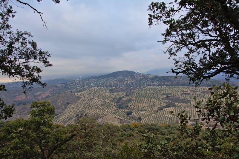 与橄榄树的谷在内华达山山,构筑由树 库存图片