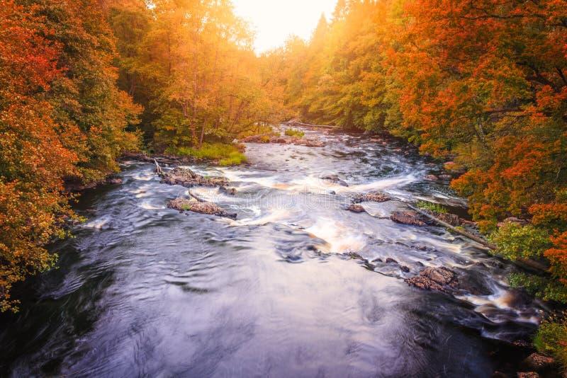 与橙色和红色森林秋天的河风景 免版税库存照片