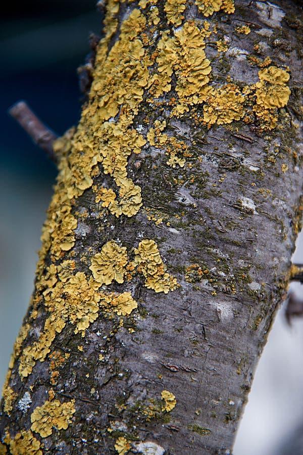 与橙黄色青苔的倾斜的树枝 免版税库存照片