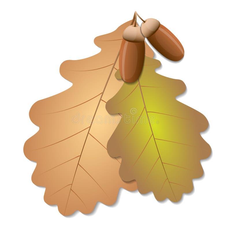 与橡子的橡木叶子 库存例证