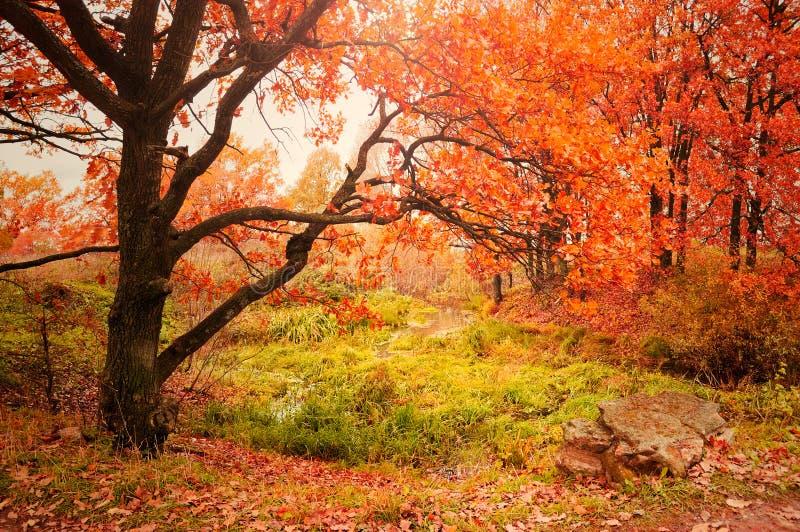 与橡树的秋天风景在The Creek附近 免版税图库摄影