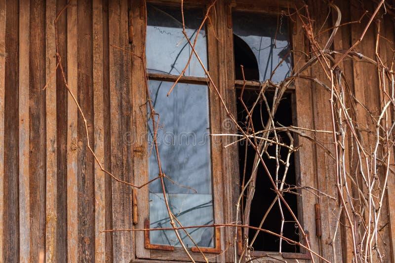 与残破的玻璃的一个窗口在一个被放弃的老木房子,包围由狂放的葡萄分支  从街道的视图 温暖 库存图片
