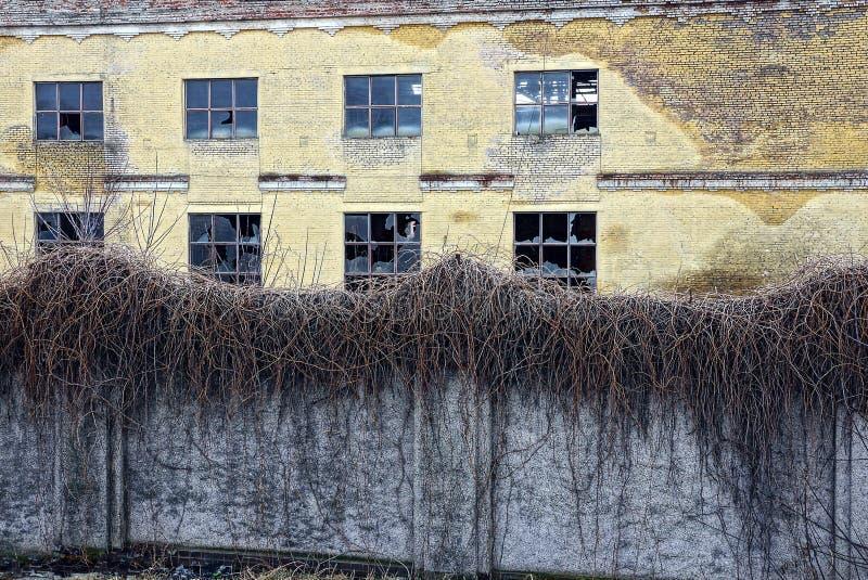 与残破的窗口的一个老被放弃的大厦在长得太大的植物后篱芭  免版税库存照片