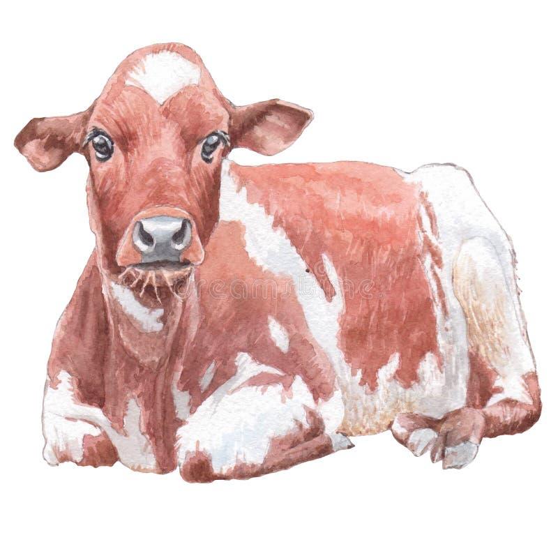 与母牛的例证 向量例证
