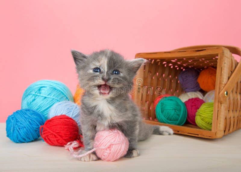 与毛线球的被稀释的tortie小猫  免版税图库摄影