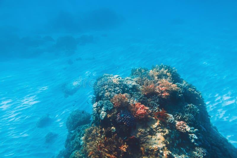 与水下的珊瑚的热带野生生物 海洋生活在印度洋 免版税库存照片