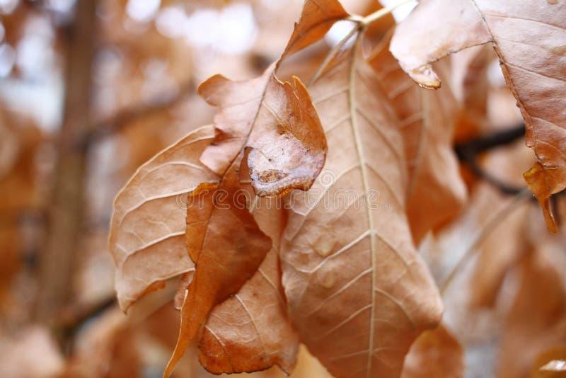 与水下落的干燥秋叶 季节秋天概念 自然墙纸背景 图库摄影