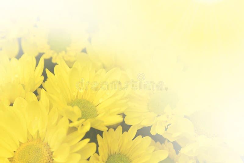 与水下落的黄色菊花花 库存图片