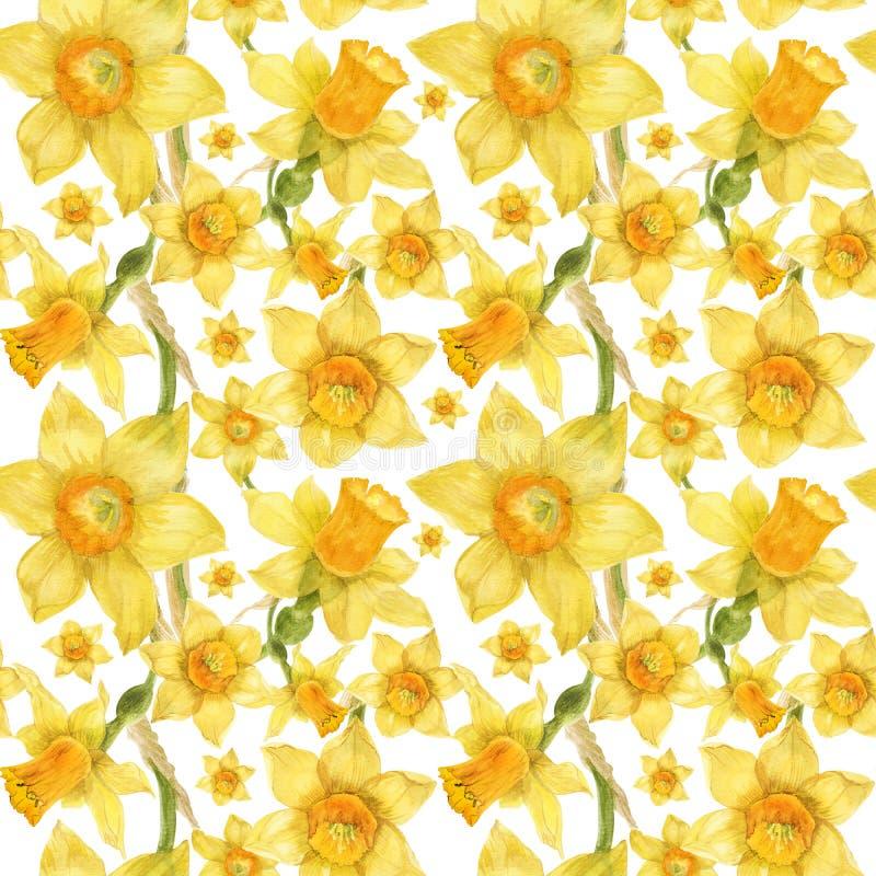 与水仙的水彩现实花卉样式 免版税库存照片