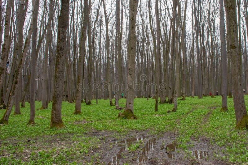 与水和泥的森林风景 免版税图库摄影