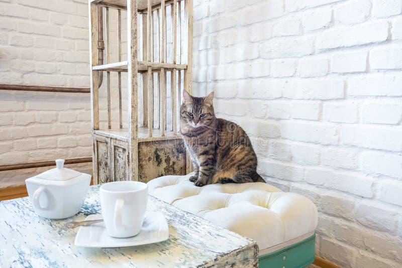 与水壶的表和杯子,椅子,在一个白色砖墙的背景的架子在葡萄酒顶楼内部与猫 库存图片
