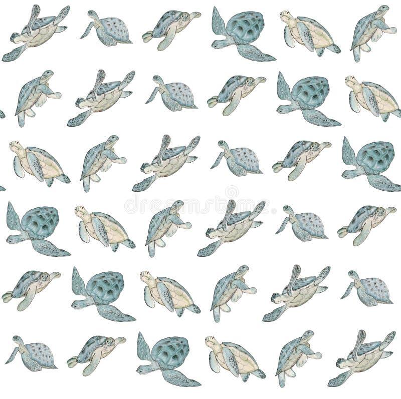 与水彩海龟的无缝的样式在白色背景 夏天异乎寻常的印刷品 皇族释放例证