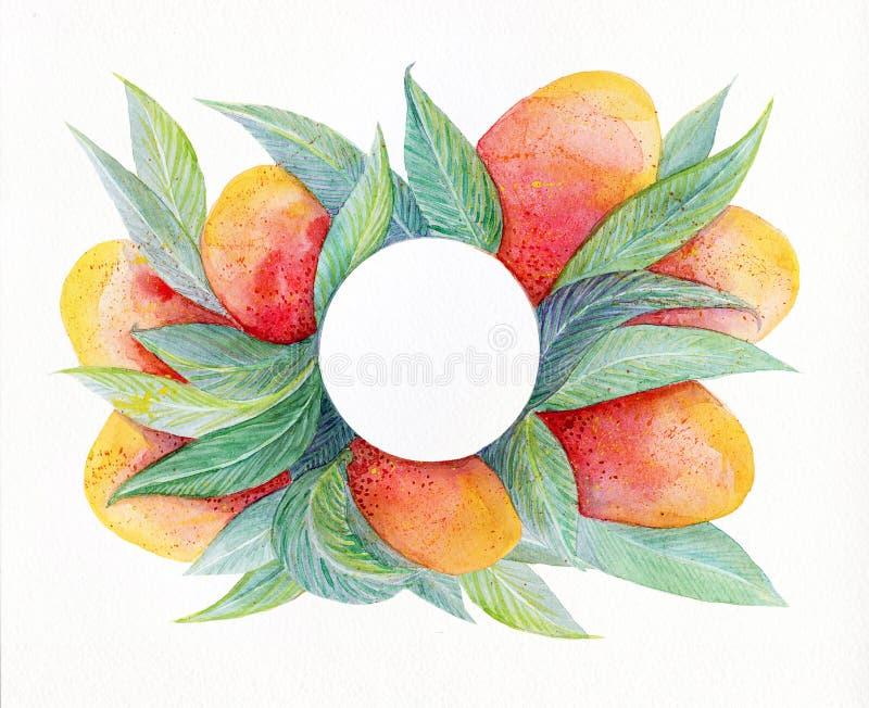 与水彩的五颜六色的背景结果实芒果框架 水彩芒果果子和在白色背景隔绝的叶子特写镜头 库存例证