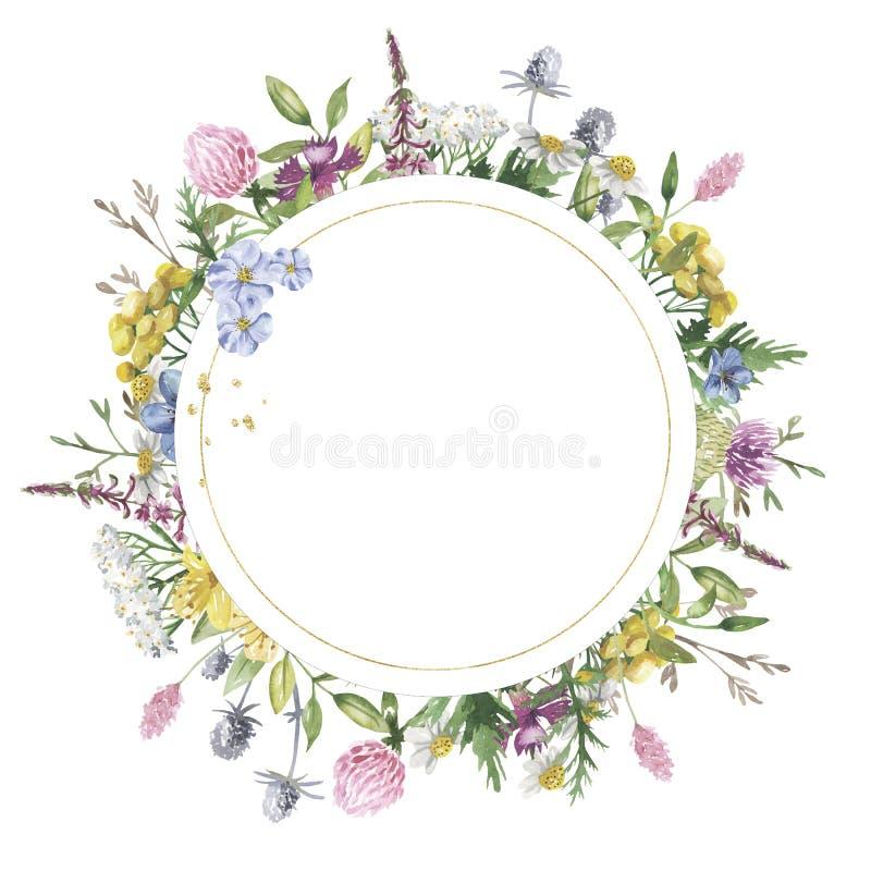 与水彩野花的圆的金黄花卉框架 库存例证