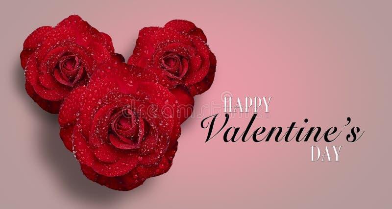 与水滴的红色玫瑰在白色背景 免版税库存图片