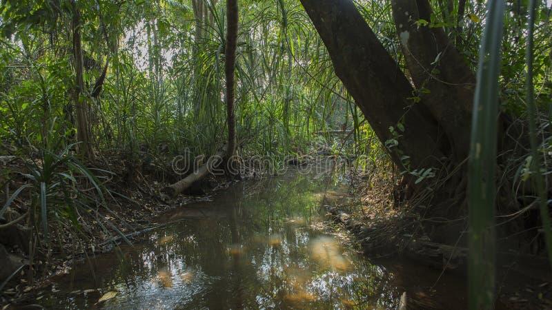 与池塘的风景 在热带棕榈6月上的美妙的日出 库存照片