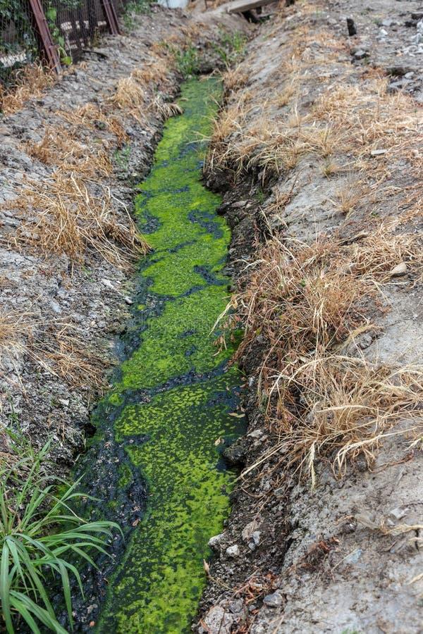 与污水一起的肮脏的污水在沿街道的一个开放垄沟 肮脏的排水设备,这里一位开放下水道收藏家与毒性海藻 e 库存照片