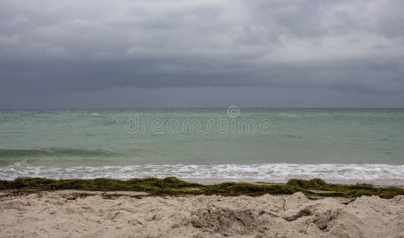 与沙子海滩、海草和深蓝天空的海岸 在风暴前的海洋海岸 秋天海岸线 库存图片