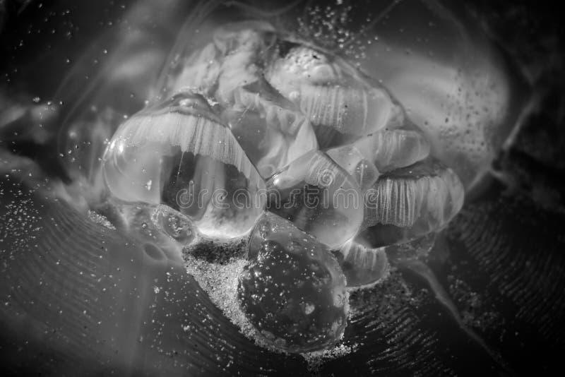 与沙子的水母在海岸 库存照片