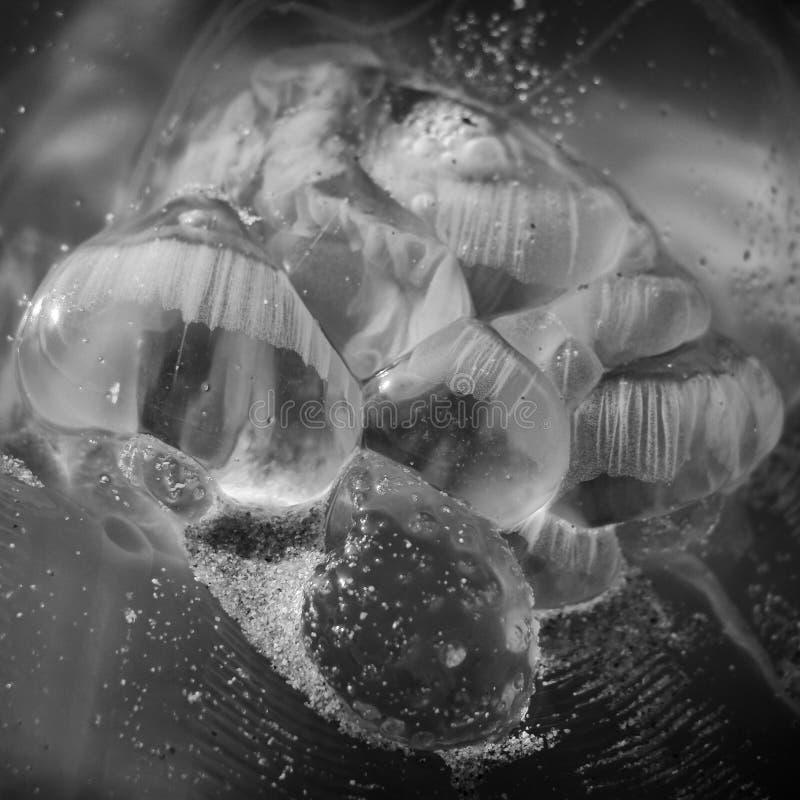 与沙子的水母在海岸 免版税库存照片