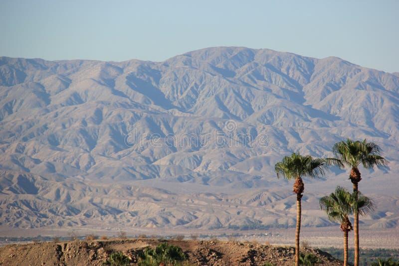 与沙漠山的棕榈树 库存图片