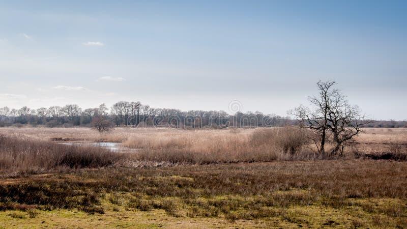 与河、石南花和树的荷兰风景 免版税库存照片