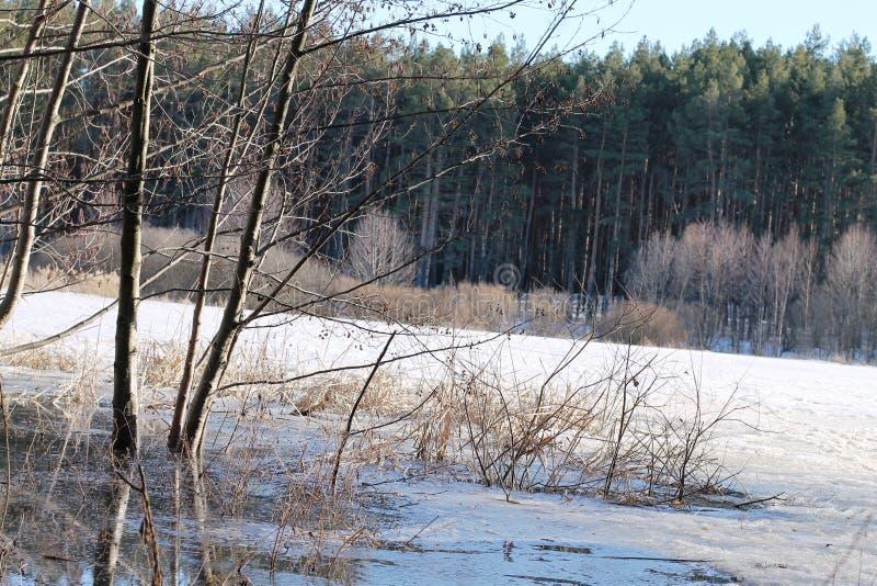与河和树的冬天风景在冬天 库存照片