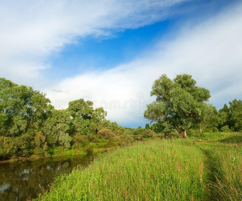 与河和森林,全景的夏天风景 免版税库存图片