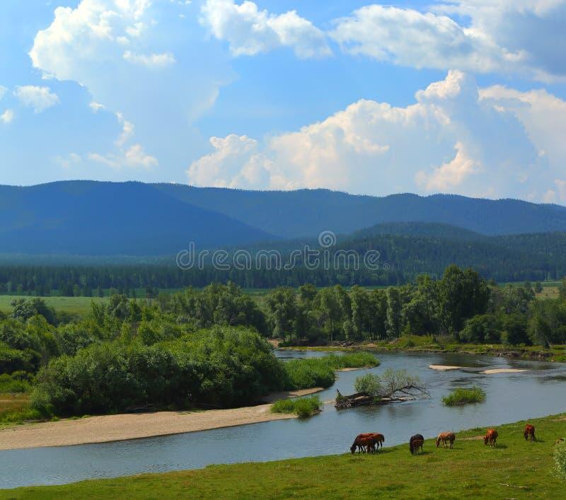 与河山和马的夏天风景 免版税库存图片