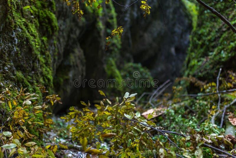 与河的峡谷 库存照片