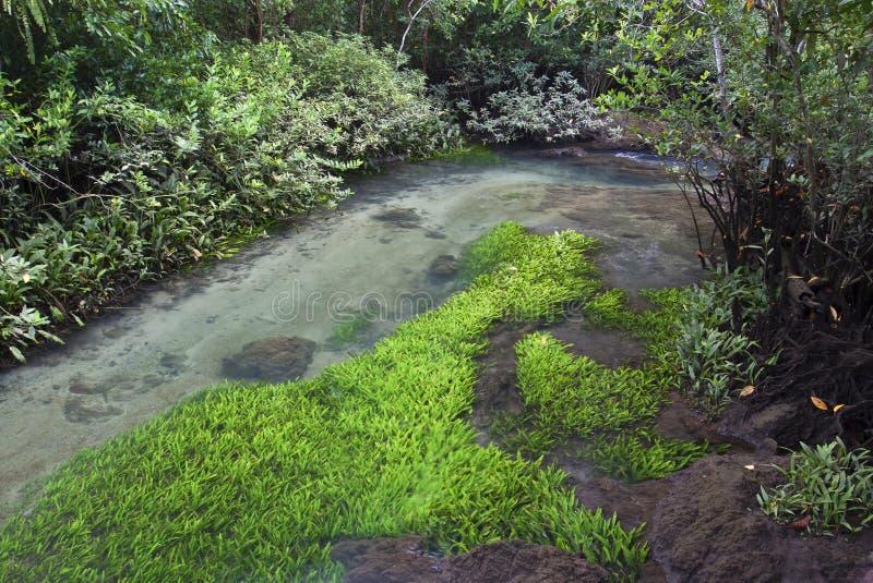 与河的沼泽 免版税库存图片