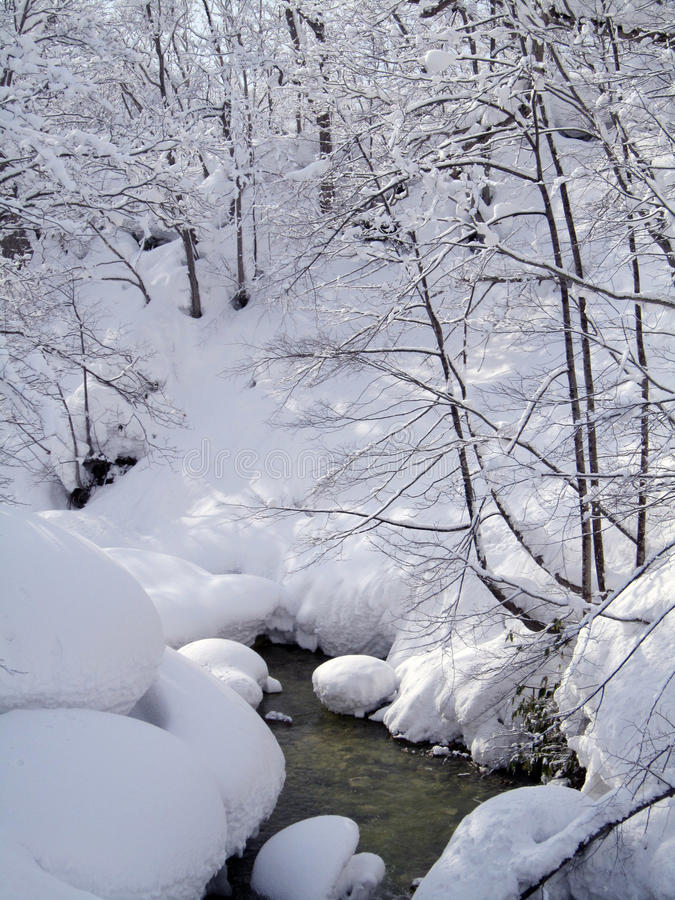 有河的美丽的雪森林 免版税图库摄影