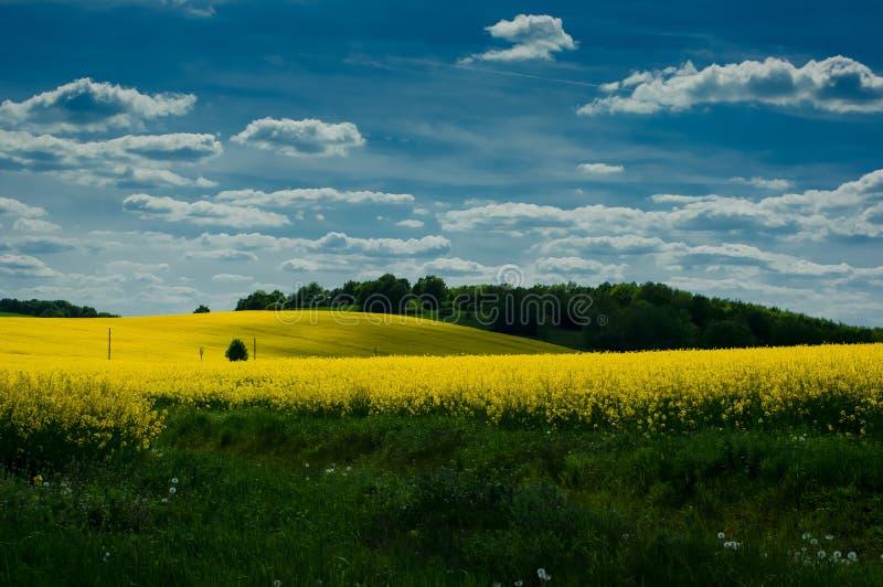Download 与油菜籽领域的风景 库存照片. 图片 包括有 绽放, 本质, 强奸, 杂草, 风景, 天空, 草甸, 庄稼 - 72352798