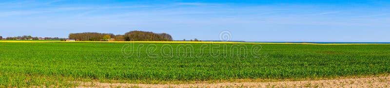 与油菜领域的全景风景 库存图片