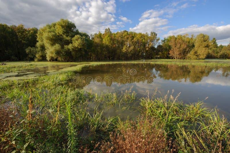 与沼泽地和冲积森林的风景 图库摄影