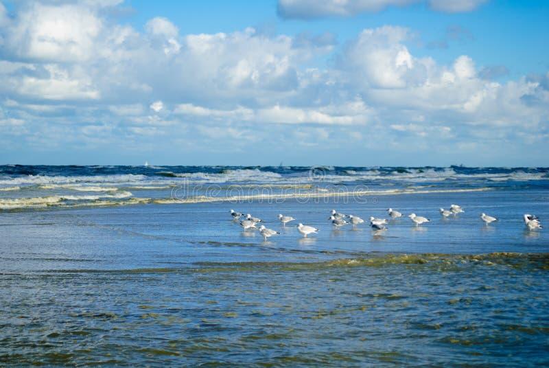 与波浪的海鸥 库存照片