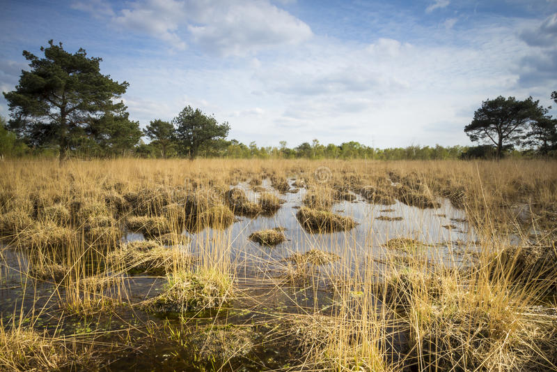 与泥炭沼的沼泽 图库摄影