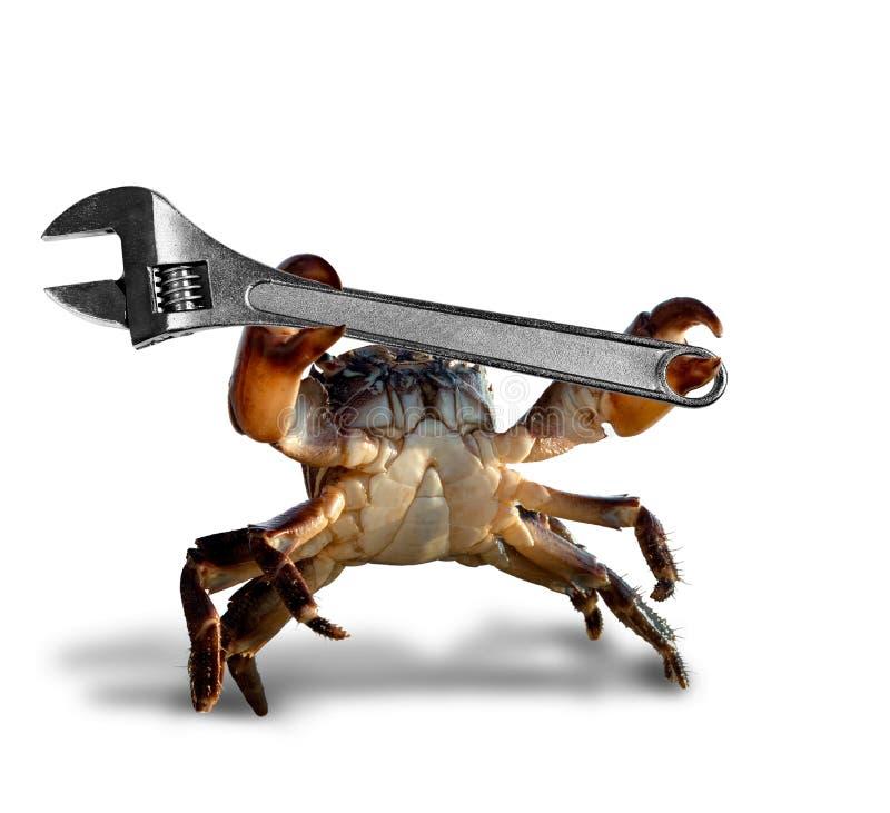 与活络扳子的螃蟹 库存图片