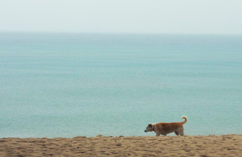 与流浪狗海边海滩照片的海lanscape 免版税库存照片