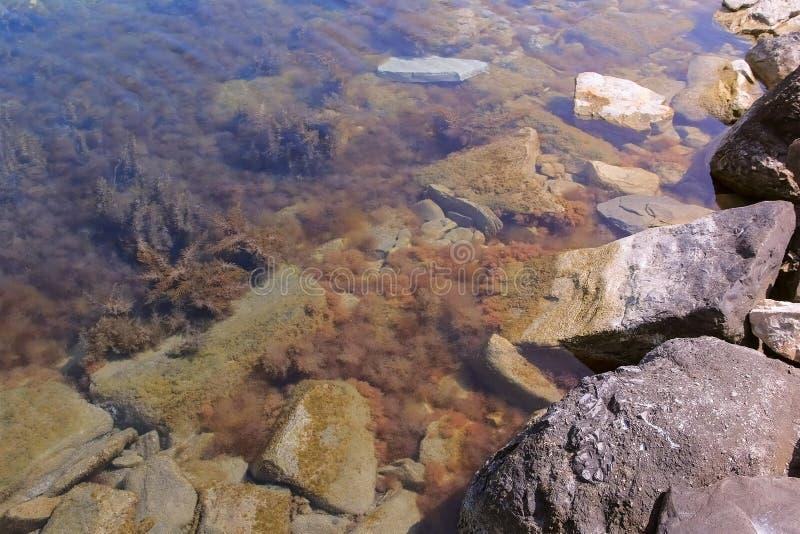 与浅褐色和绿色海草的石海滩在海底在透明水中 库存照片
