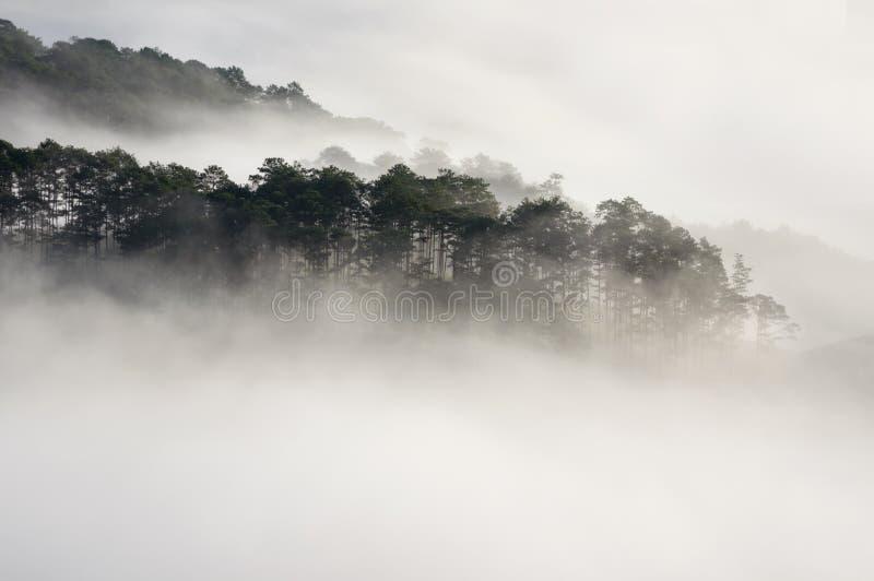 与浓雾和不可思议的光的背景在日出 咖啡农场和小屋精采阳光的第2部分 库存照片