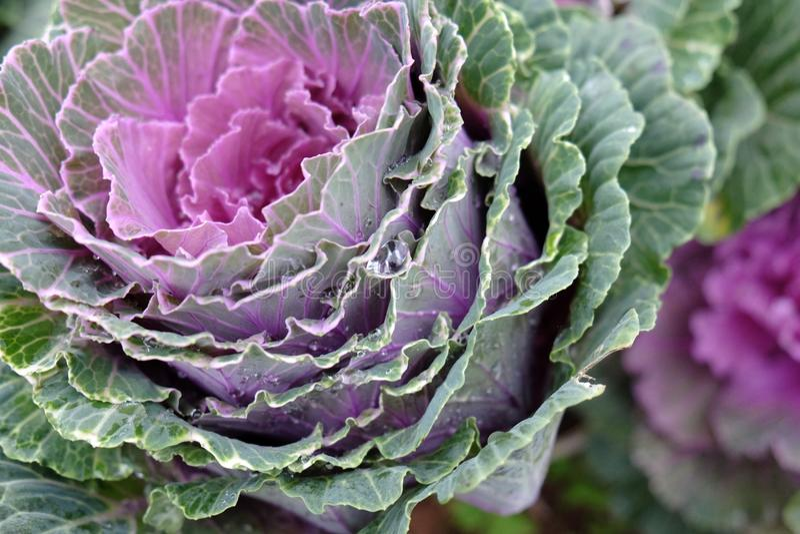 与浪花的紫色花 免版税库存图片
